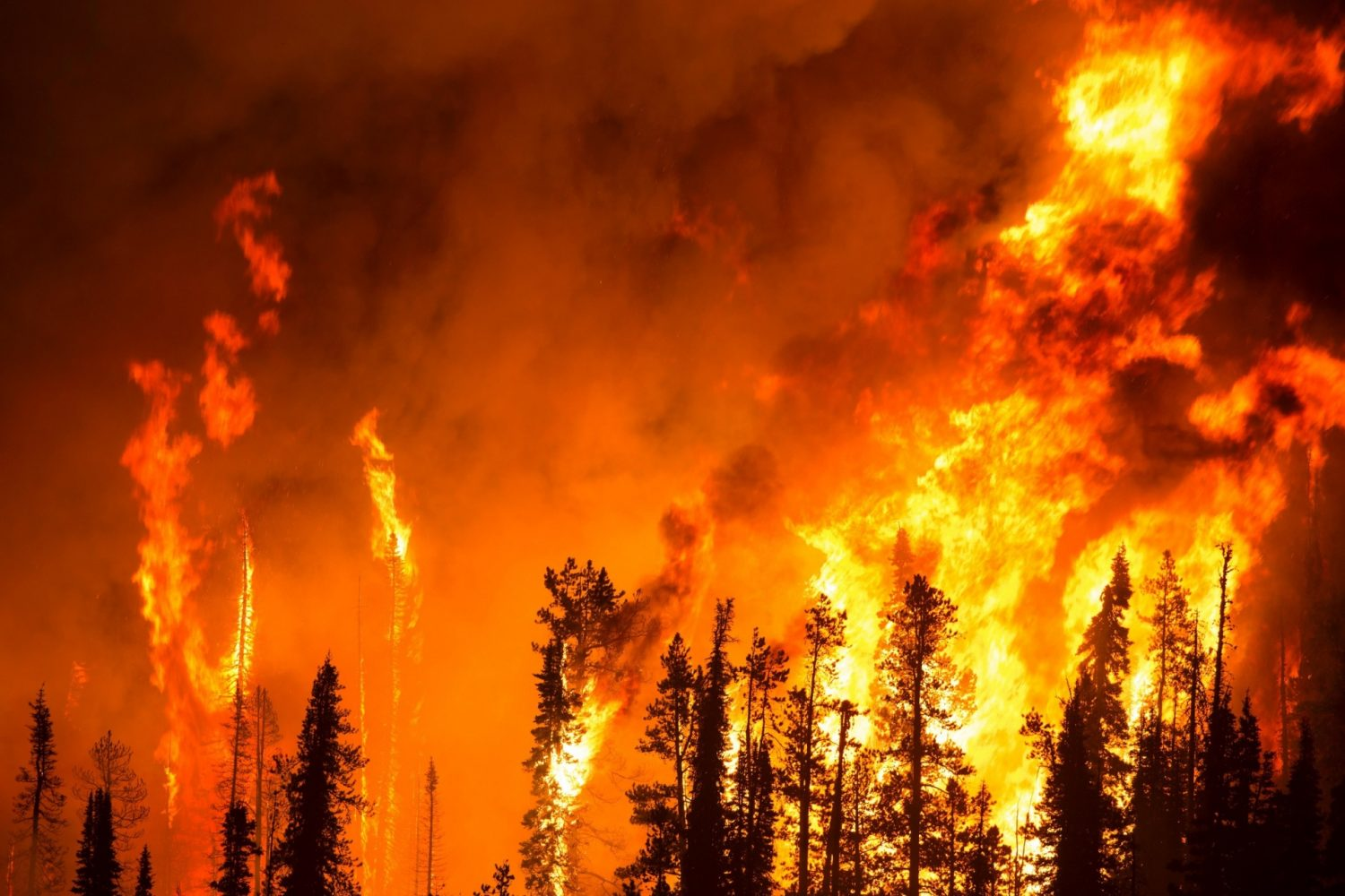 Wild fires disaster recovery